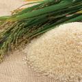 Rice-i